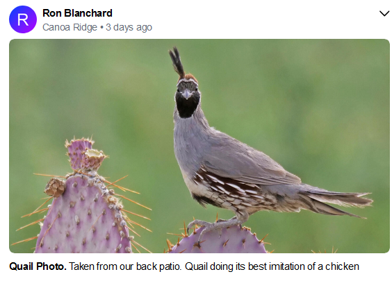 Ron Blanchard Quail July 2020.PNG