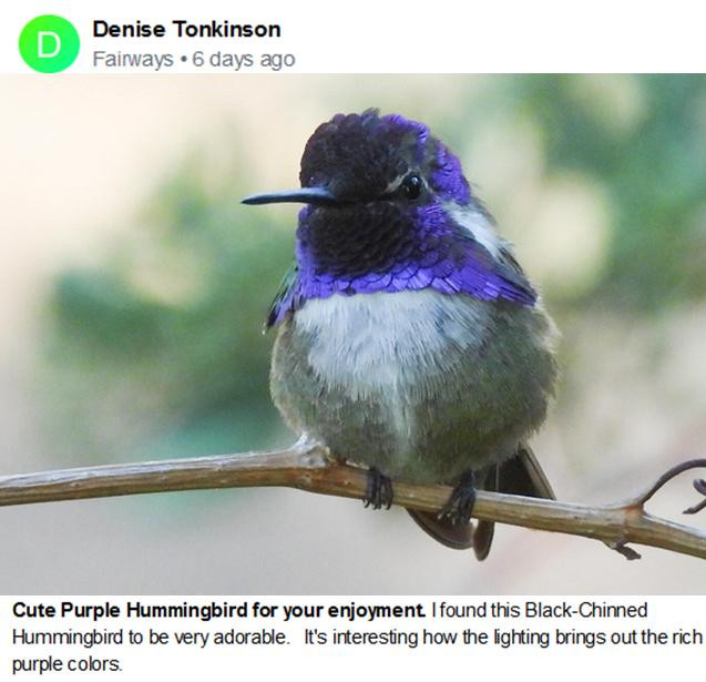 Denise Tonkinson Purple Hummingbird Jull