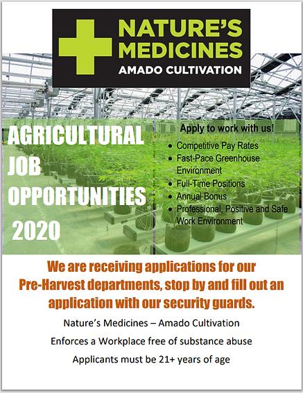 Amado Management Job ad June 2020.PNG