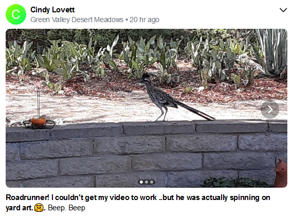 Cindy Lovett Beep Beep roadrunner July 2