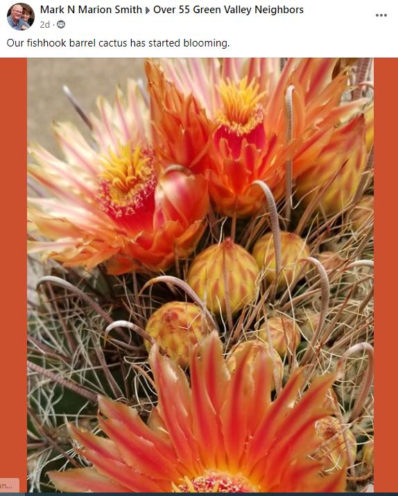 Mark N Marion Smith fishhook cactus bloo