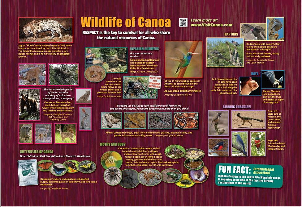 Animals, riparian, birds, bugs and butterflies of Canoa.