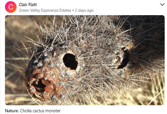 Clair Flatt Cholla Cactus Monster 7 2020