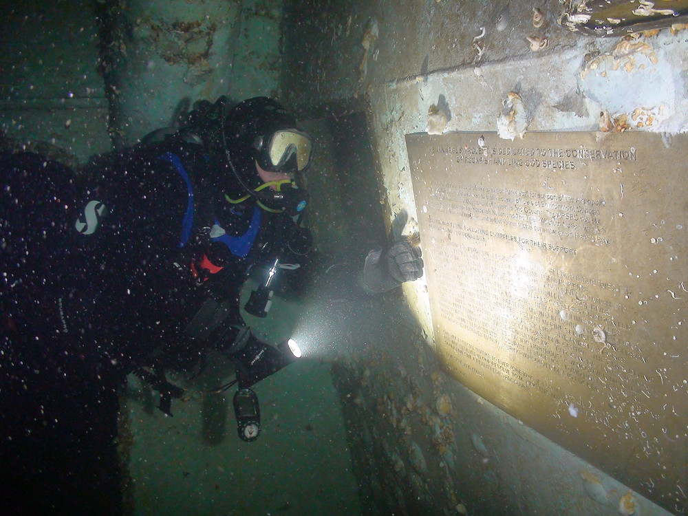 man scuba diving the HMCS Annapolis artificial reef in Howe Sound
