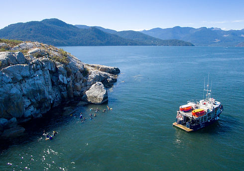 boat tours vancouver snorkel with seals sea dragon charters.jpg