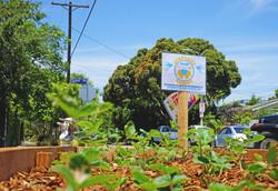 Community Healing Gardens