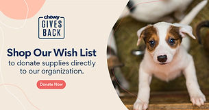 chewy-gives-back-dog-1200x630.jpg