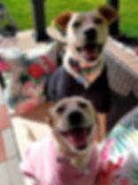 Happy pups.jpg