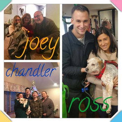 Joey, Chandler & Ross