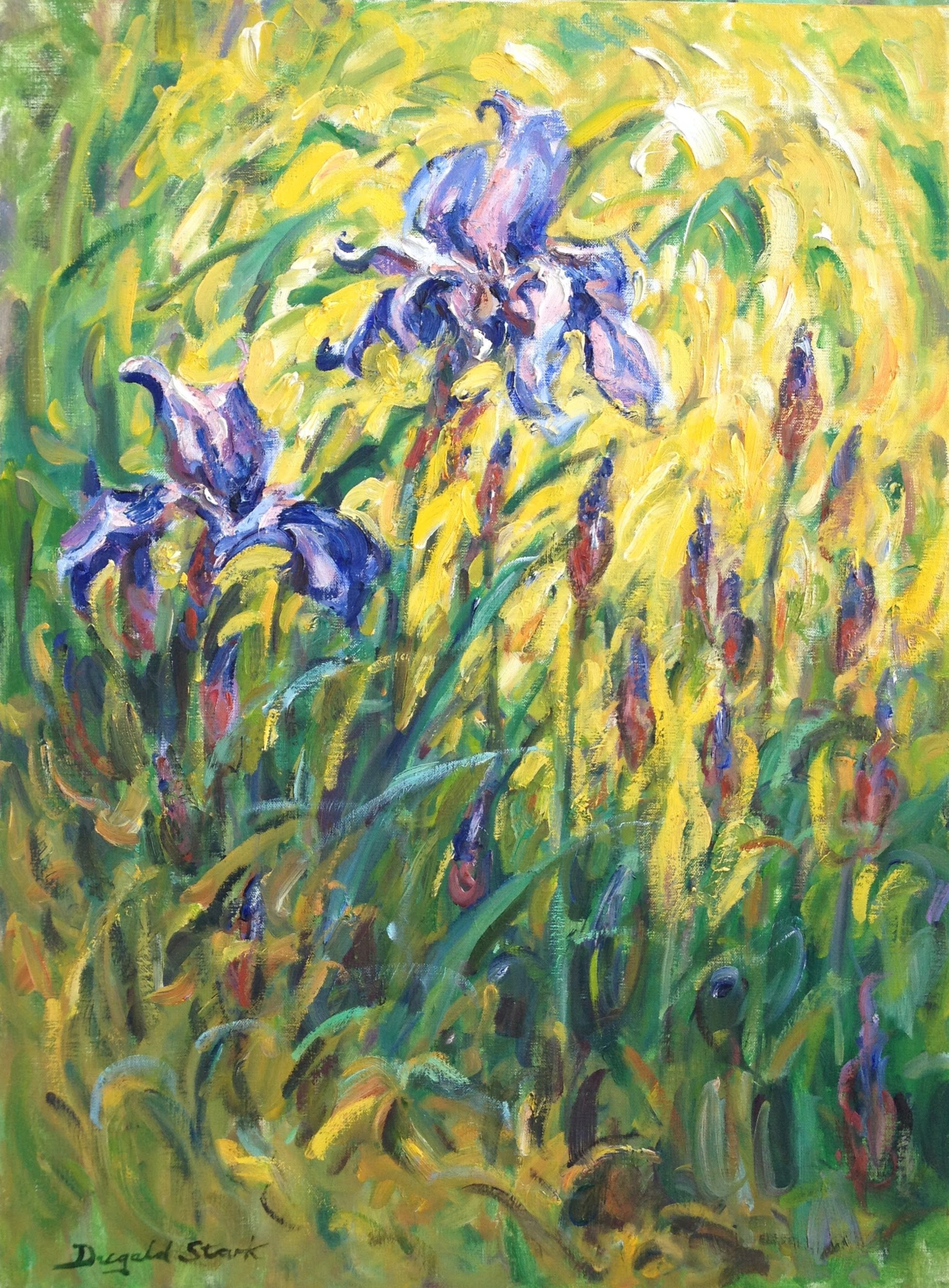 Irises by the Pond