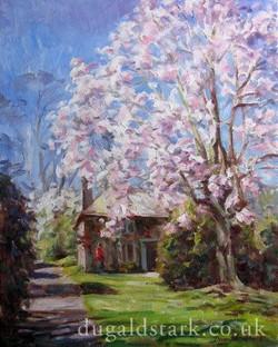 Magnolia, Lanhydrock