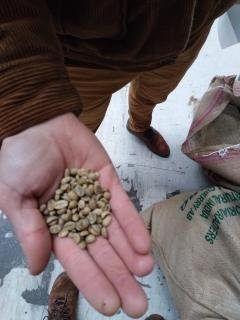 Grains café brut avant torréfaction.jpg