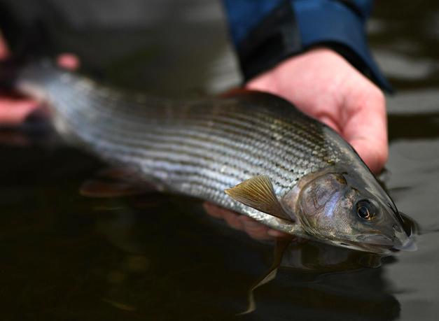 Photo ourtesy of scotia fishing / callum conner