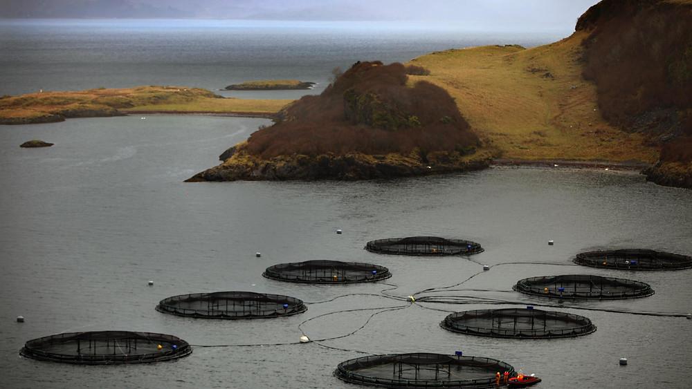 Example of a Salmon Farm in Scotland