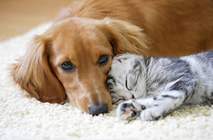 dog-and-cat-on-carpet.jpg