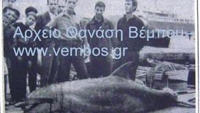 Δελφίνια: «Οι άσπονδοι εχθροί των ψαράδων μας»