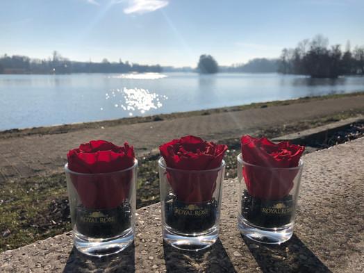 Royal Rose glass