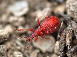 beetle-1404606_960_720.jpg