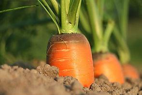 carrot-1565597_960_720.jpg