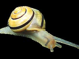 snail-2704403_960_720.png