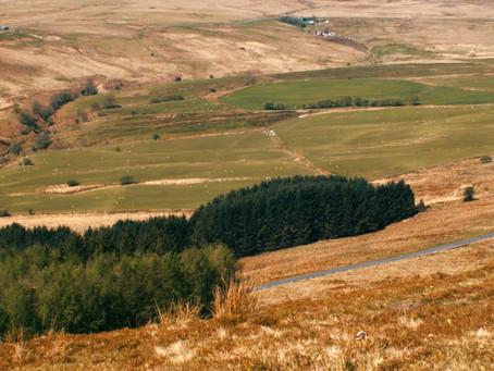 Creation of 'vast' tree plantation had 'detrimental effect' on Welsh language in Cwm Penmachno