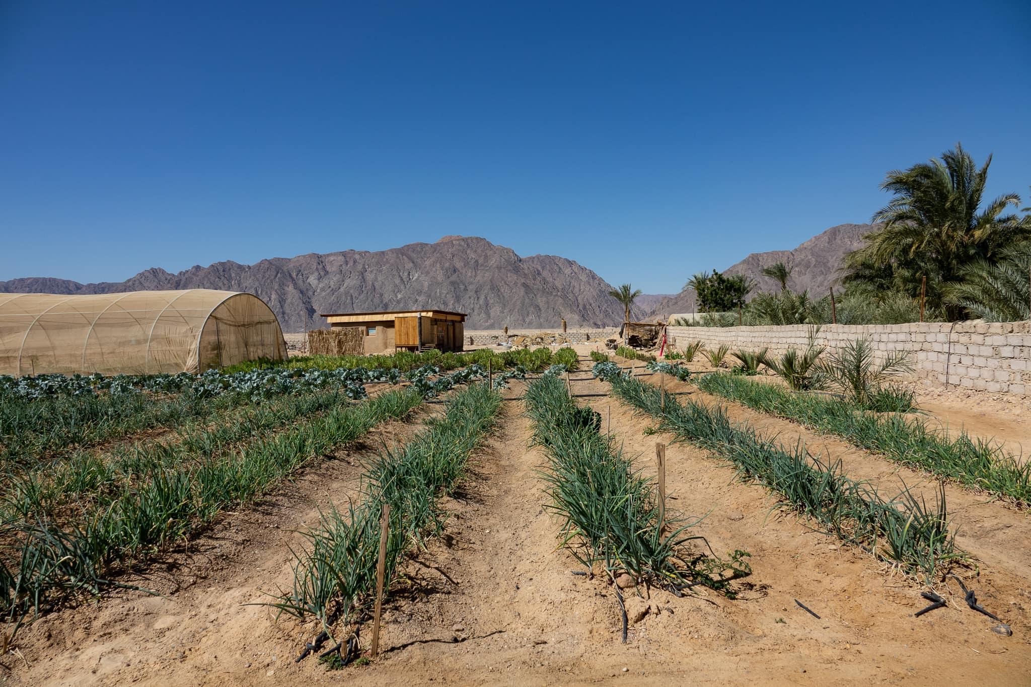 Habiba farm