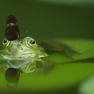 La favola dello scorpione che non era uno scorpione e della rana che non era una rana