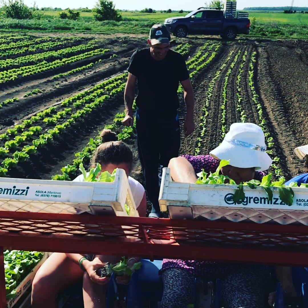 la plantat salata