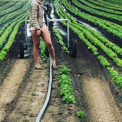 Elena iriga salata