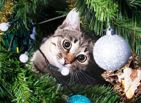 Cats + Christmas Tree