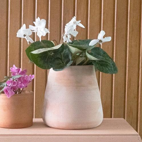 Maceta Begonia