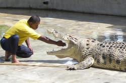 Crocodile Farm