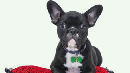 FREE PetfetchID Smart ID Tag