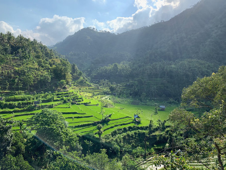 Bali with Kids: side by side organic farm