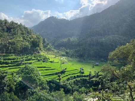 Bali with Kids: side by side organic farm