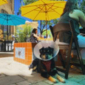 patio:dog .jpg