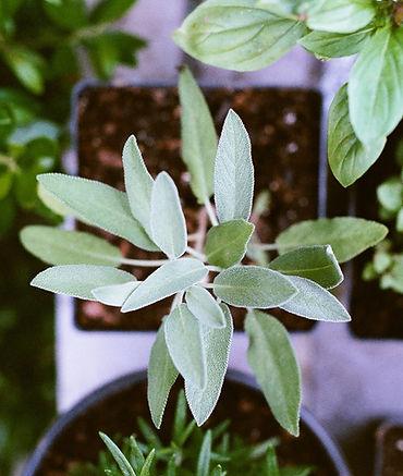 Green Plant Naturopathy