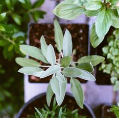 Herbs - D. Raymond