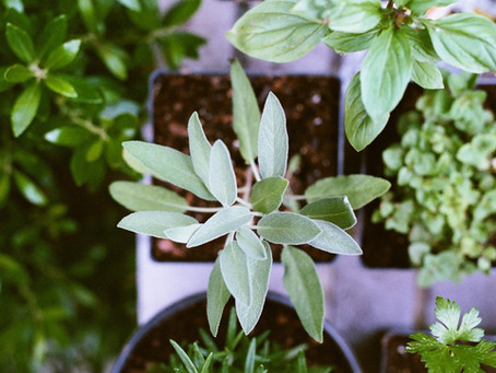 Eight Reasons You Should Be Growing Your Own Herbs