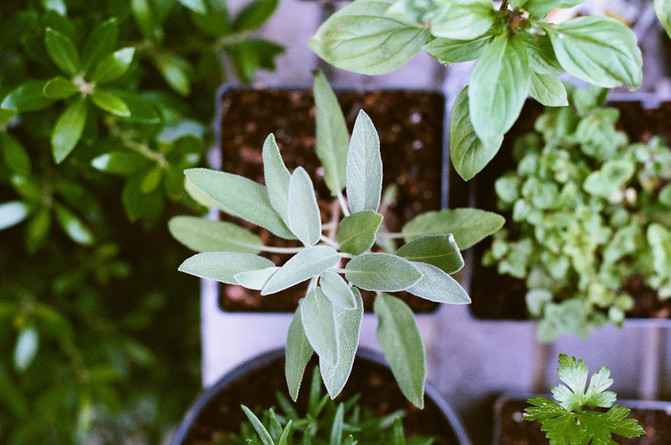 PLANTS FOR DRY SKIN