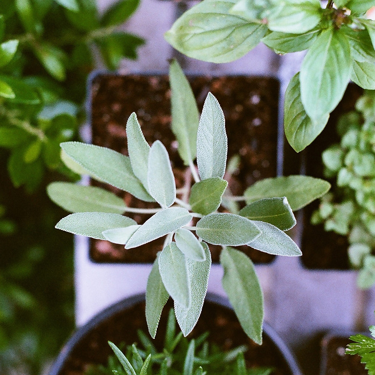Creating plants for free: House plants and herbs 7th May