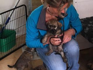 Titeren Puppies Cara & Bosse