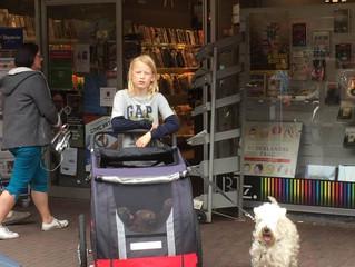 Wandelen met Cara en haar puppies in Oegstgeest / Walking with Cara and her puppies in Oegstgeest