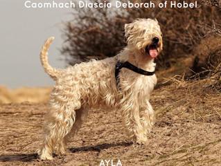 Hoera! We hebben een geschikte partner voor Ayla gevonden! / Hurray! We've found a suitable part