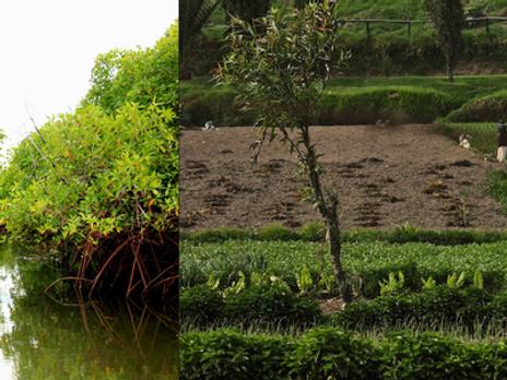 Restaurar funciones ecosistémicas claves como medida de adaptación y resiliencia al cambio climático