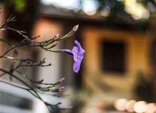 4 poemas do livro 'A Flor Lilás'
