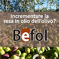 BEFOL_resa in olio olivo.PNG