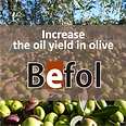BEFOL_oil yield in olive.PNG