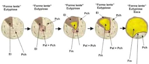 Schema diffusione Mal dell'Esca e Eutipiosi (Trichoderma e Mal dell'Esca)