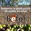 BEFOL_aceite en oliva.PNG